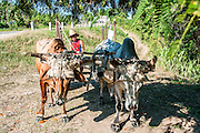 ox drawn cart Guantanamo Province, Cuba