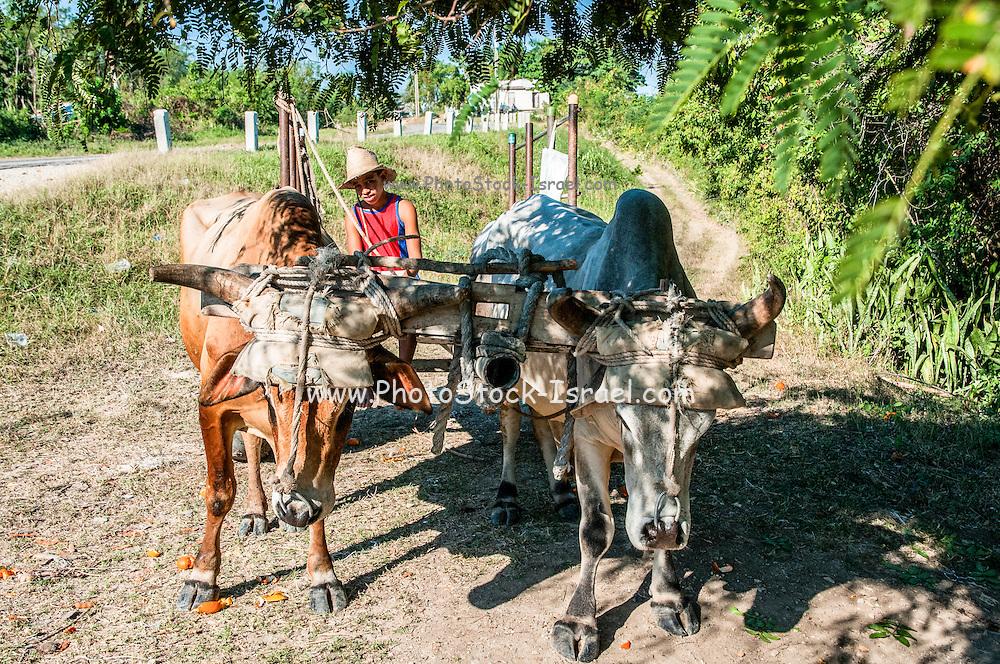 ox drawn cart Guantanamo Province, Cuba