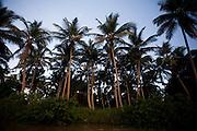 Belmonte_BA, Brasil...Rio Pardo, que liga Belmonte a Canavieiras, Bahia...The Pardo river, between Belmonte and Canavieiras, Bahia...Foto: LEO DRUMOND / NITRO