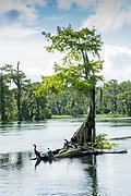 Wakulla Springs & River.Florida