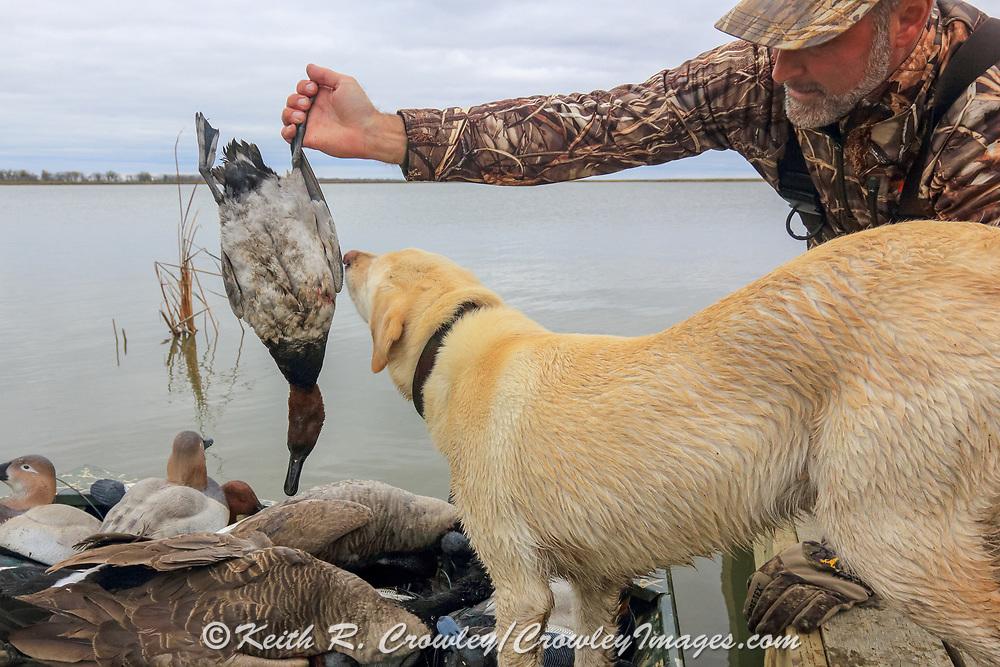 A successful hunter with his Yellow Labrador Retriever.