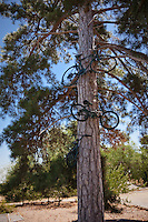 Bikes hanging in a tree in the carpark.