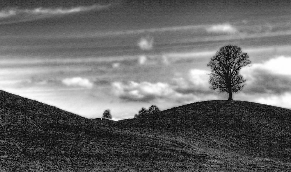 Tree on hill - silhoutte