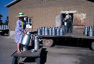 = Mexican menonites Traditionnal activities are breeding, farming and cheese making.  Ciudad Ghautemoc  Mexico +
