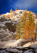 Mountain Larches at Inspiration Lake
