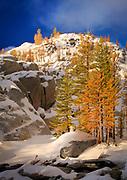 Mountain Larches at Inspiration Lake