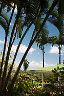 Palm trees around the colonial style house in the Sunnyside Garden, St. George's, Grenada, West Indies, Caribbean