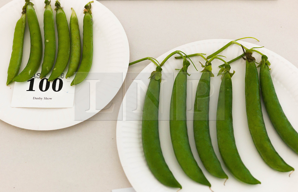 © Licensed to London News Pictures.12/08/15<br /> Danby, UK. <br /> <br /> Broad beans and other vegetables are exhibited before judging commences during the 155th Danby Agricultural Show in the Esk Valley in North Yorkshire. <br /> <br /> The popular agricultural show attracts competitors and visitors from all over the surrounding area to this annual showcase of country life. <br /> <br /> Photo credit : Ian Forsyth/LNP