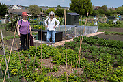 A mother and daughter admire the progress of their veg at the family vegetable allotment plot, on 30th May 2021, in Nailsea, North Somerset, England.