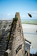 A pigeon takes flight off the roof of a museum at Mont Saint-Michel in Normandy, France