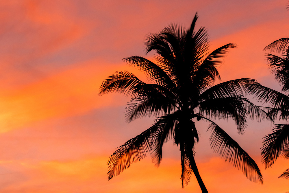 Jan. 9, 2019: The sun sets behind palm trees in Juno Beach, FL.