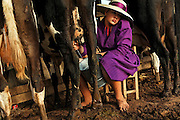 Sara Rempel looks on as she milks a cow in the early morning.