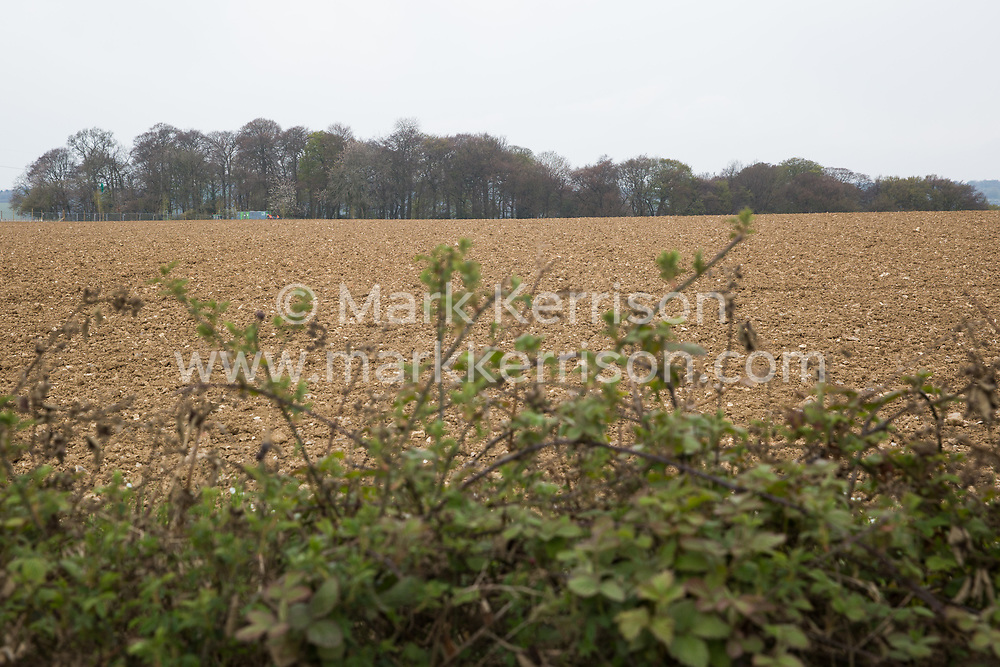 Wendover, UK. 28th April, 2021. Ancient woodland at Jones Hill Wood is viewed across a field. Felling of Jones Hill Wood, which contains resting places and/or breeding sites for pipistrelle, barbastelle, noctule, brown long-eared and natterer's bats and is said to have inspired Roald Dahl's Fantastic Mr Fox, has resumed after a High Court judge refused environmental campaigner Mark Keir permission to apply for judicial review and lifted an injunction preventing further felling for the HS2 high-speed rail link.