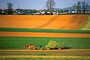 Farm land expanse, Amish, hay harvest, Lancaster Co., PA