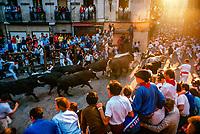 Encierro (Running of the Bulls), the Fiesta of San Fermin, Pamplona, Spain