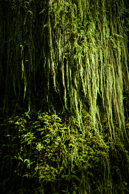 Detail of tree trunk covered in moss