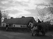Bringing Home the Fodder, Near Roscrea, Co. Tipperary.30/03/1957