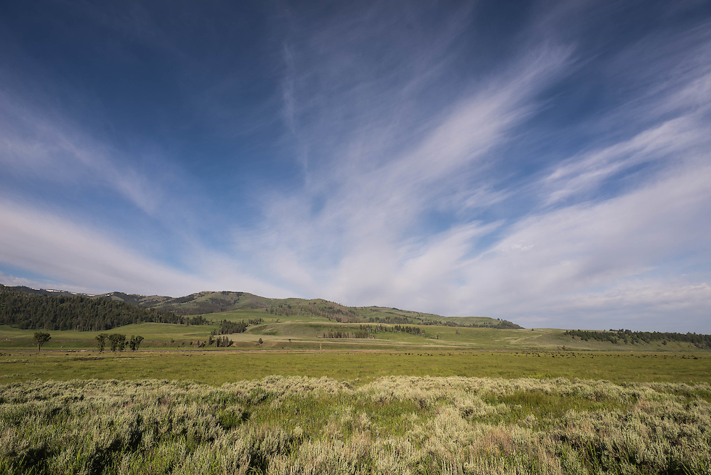 The Lamar Valley on a midsummer day