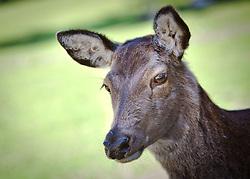 23.04.2011, Wildpark Ferleiten, AUT, Wildpark Ferleiten, im Bild ein junges Reh // a young deer, EXPA Pictures © 2011, PhotoCredit: EXPA/ J. Feichter