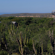 Windmill in Todos Santos highway. BCS, MX.