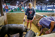 21 JULY 2020 - COLFAX, IOWA: A high school student washes her market hog before the swine show at the Jasper County Fair in Colfax, about 30 miles east of Des Moines. Summer is county fair season in Iowa. Most of Iowa's 99 counties host their county fairs before the Iowa State Fair. In 2020, because of the COVID-19 (Coronavirus) pandemic, many county fairs were cancelled, or scaled back to concentrate on 4H livestock judging. The Iowa State Fair was cancelled completely. The Jasper County Fair cancelled most events and focused on just the 4H contests. Tuesday were the swine contests.             PHOTO BY JACK KURTZ