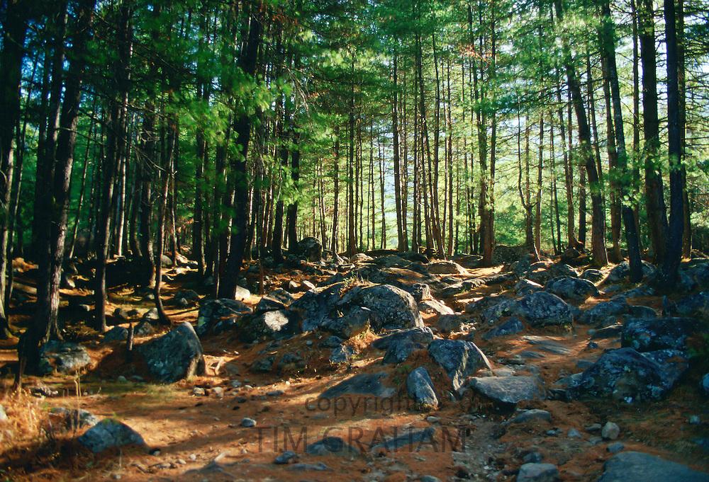 Dappled sunlight through trees in a forest scene in Bhutan.