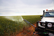 A ute with a spray rig used to spray insecticides on Australian Plague Locusts is driven through at risk wheat crops by farmer Brent Morrish in Ouyen, Victoria, Australia.   The Victorian government has pledged $43.5million in support to help combat what could be the worst locust plague in over 75 years in South Eastern Australia with potential imapcts on agriculture of over $2 billion.