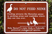Nene warning sign on the Kilauea Iki trail, Hawaii Volcanoes National Park, Hawaii USA