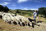 Elevage de moutons sur le causse Méjean.