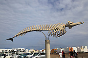 Skeleton of common beaked whale at El Cotillo, Fuerteventura, Canary Islands, Spain