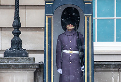 © Licensed to London News Pictures. 09/02/2021. London, UK. A Queen's Guard stands in the falling snow at Buckingham Palace this morning as Storm Darcy hits London and the South East with yet more snow and freezing temperatures today. The Met Office have issue numerous weather warnings for heavy snow and ice with disruption to travel, power cuts and possible stranded vehicles as the bad weather continues throughout the country.  Photo credit: Alex Lentati/LNP