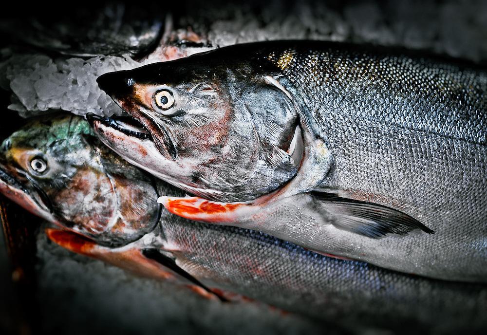 Fresh Salmon on ice at the Seattle Public Market.