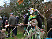 Hanging a good wishes label on a cider apple tree at an orchard-visiting wassail in Kilham village, Yorkshire Wolds, UK on 21st January 2017. Wassail is a traditional Pagan winter celebration in cider-producing regions of England, reciting incantations and singing to the trees to promote a good harvest for the coming year. Pieces of toast soaked in cider are hung in the branches to attract robins to the tree as these are said to be the good spirits of the orchard. To ward off evil spirits, villagers scare them away by banging pots and pans and making as much noise as possible