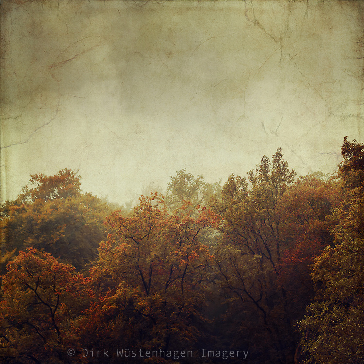 Forest on a fall morning - textured photograph