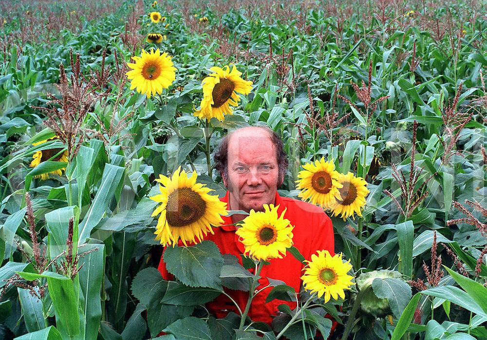 lutten hr mensink temidden van zonnebloemen in maisveld..foto frank uijlenbroek©1996/nico