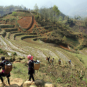 Tourists trekking with Black Hmong guides showing terraced fields near Sapa, Northern Vietnam. Sapa and the surrounding highlands are close to the Chinese border in Northern Vietnam and is inhabited by highland minorities including Hmong and Dzao groups. Sapa is now a thriving tourist destination for travelers taking the night train from Hanoi. Sapa, Vietnam. 16th March 2012. Photo Tim Clayton