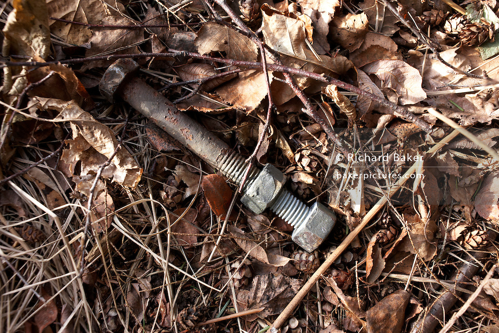 Dropped during construction of electricity pylons, a bolt and its nut lies on a forest floor, Clowes Wood, Chestfield, Kent