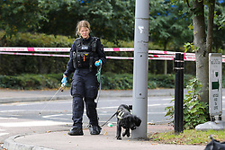 © Licensed to London News Pictures. 18/08/2020. London, UK. A police search dog on Jubilee Avenue in Chingford, East London after a man was stab near Highams Park railway station. Police were called shortly before 02:30hrs on Tuesday, 18 August following reports of a man with stab injuries. Prior to the arrival of London Ambulance Service, officers carried out first aid on the 18-year-old- man. He was taken to an east London hospital and his injuries are currently believed to be life threatening. The man is thought to have sustained his injuries during a fight with three other men near to the railway crossing. Photo credit: Dinendra Haria/LNP