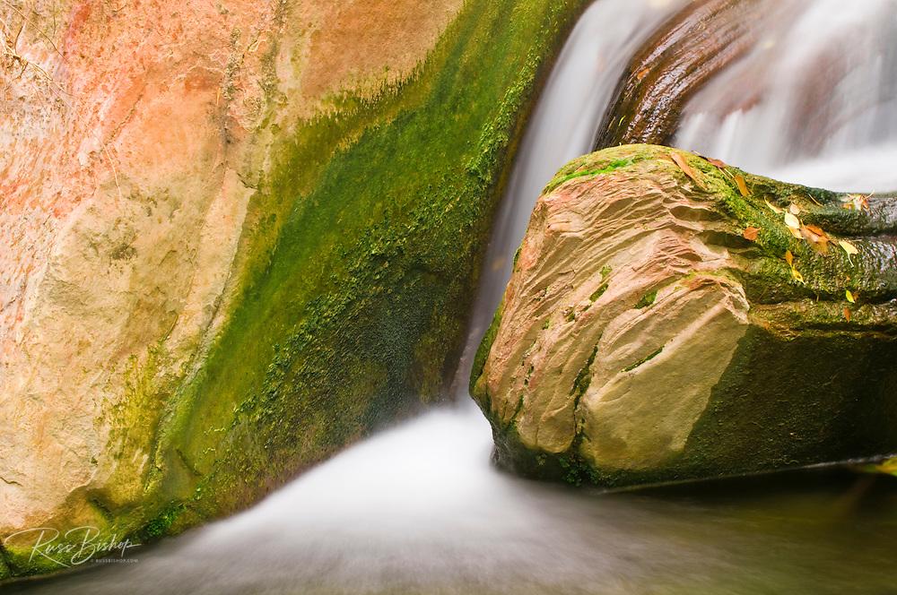 Stream below the Weeping Wall, Zion National Park, Utah