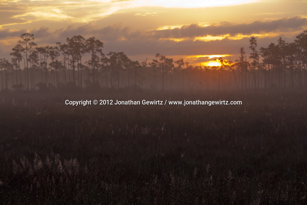 The rising sun warms a foggy sawgrass meadow in Everglades National Park, Florida. WATERMARKS WILL NOT APPEAR ON PRINTS OR LICENSED IMAGES.