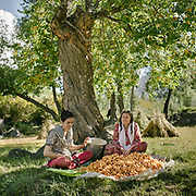 Daughter (studying in Islamabad, spends summer in village) and mother picking apricots that will be fed to the animals.<br /> Kamaris village, upper Hunza.