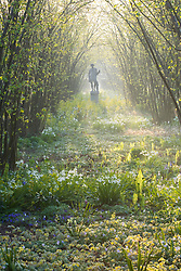 The Nuttery at Sissinghurst Castle Garden in spring with the statue of Dionysus backlit by misty morning light