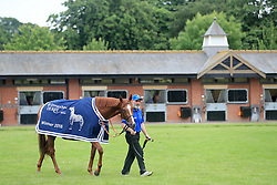 Masar is walked round the stables by groom Saeed during the homecoming event at Moulton Paddocks, Newmarket.