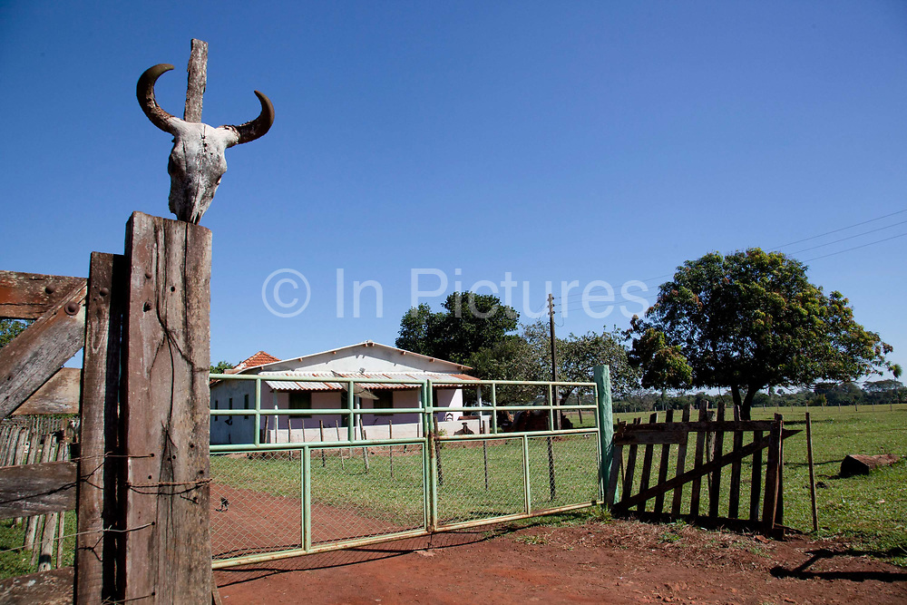 Front gate on a farm with a cows skull on the gatepost. Brazil is the largest producer of Sugar and Beef, then second for Soya and third for Maize. Many of the farms are in the state of Mato Grosso and Mato Grosso do Sul, they are often enournmous, stretching for miles kilometres. A lot of the crops are processed on site and kept in large warehouses or silos.