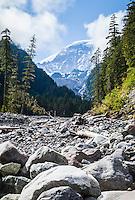 The Carbon River valley and carbon glacier, Mount Rainier National Park, Washington, USA.