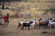 Maasai people, Kenya & Tanzania