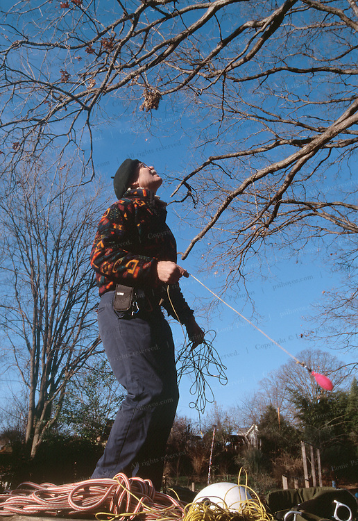 Peter Jenkins, an arborist in Atlanta, Georgia has belped to turn tree climbing into a world-wide sport pulls a pilot  line attached to a larger climbing rope, over a limb of a tree he uses to teach climbers.