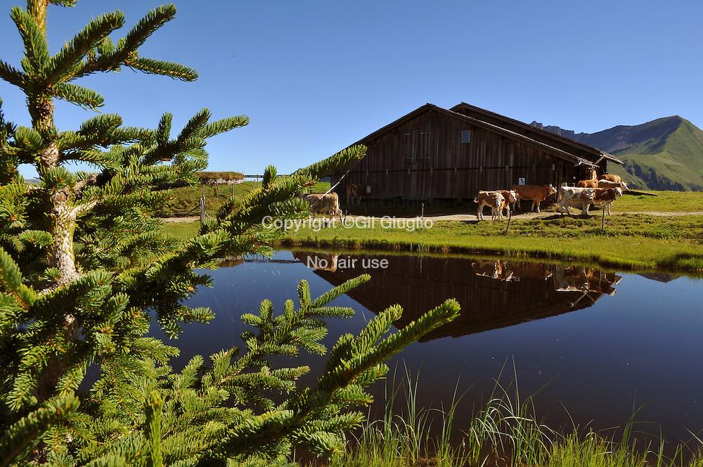 Suisse, Canton de Bern dans la région du Haut-Simmental, alpages sur Wispile // Switzerland, Bern canton, Hight-Simmental region, Pastures on Wispile