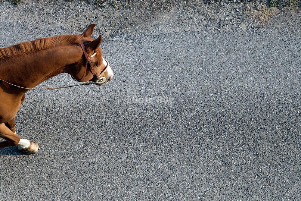horse walking on asphalt