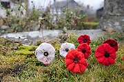 Red knitted poppies for WWI remembrance and for white for peace on 8th November 2020 in Clun, United Kingdom. According the the British Legion: The red poppy is a symbol of both Remembrance and hope for a peaceful future. The poppy is a well-known and well-established symbol, one that carries a wealth of history and meaning with it.